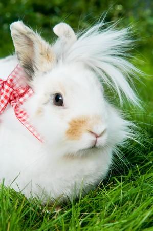 grassy plot: White muestran bastante conejo sobre c�sped verde de verano  Foto de archivo