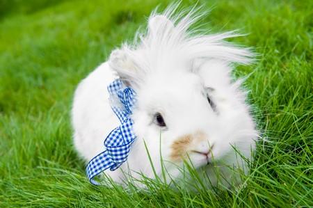 grassy plot: Pelota de conejo blanco espect�culo bonito sobre c�sped verde de verano