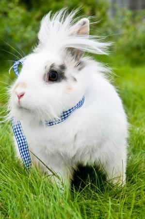 grassy plot: White pretty show rabbit buck on green summer grass
