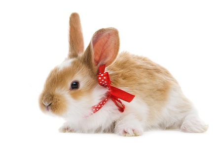 doe: one young baby rabbit isolated