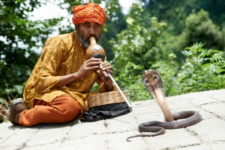 sadhu: charmer of snake in India