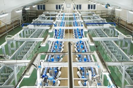 parlours: dairy milking system farm