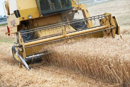 Combine harvesting cereals field photo