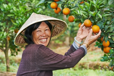 asian produce: chinese agricultural farm worker