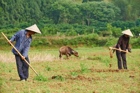 loosen: asian chinese farm workers cultivating soil in china agriculture field Stock Photo