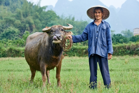 asian chinese farm worker with buffalo in china agriculture field
