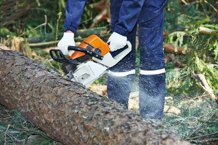 felling: Lumberjack logger worker in protective gear cutting firewood timber tree in forest with chainsaw Stock Photo