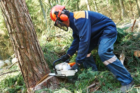 Lumberjack logger worker in protective gear cutting firewood timber tree in forest with chainsaw 版權商用圖片