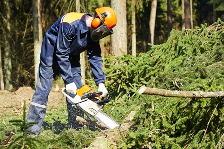 saws: Lumberjack logger worker in protective gear cutting firewood timber tree in forest with chainsaw Stock Photo
