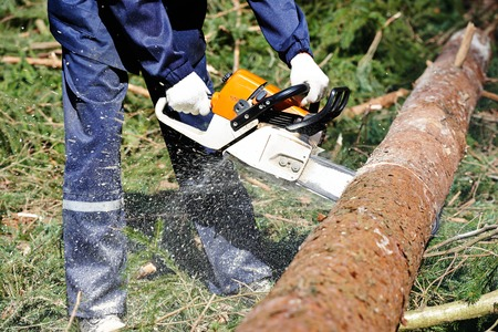 sawyer: Lumberjack logger worker in protective gear cutting firewood timber tree in forest with chainsaw Stock Photo