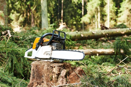 sawyer: gasoline chainsaw on cut wood in forest