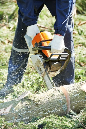 chainsaw: Lumberjack logger worker in protective gear cutting firewood timber tree in forest with chainsaw Stock Photo