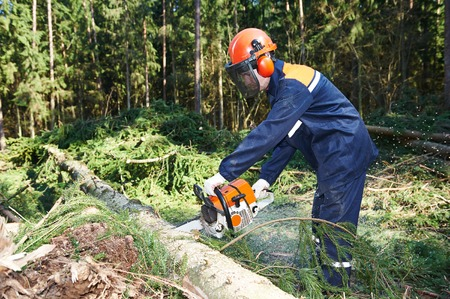 Lumberjack logger worker in protective gear cutting firewood timber tree in forest with chainsaw Banco de Imagens