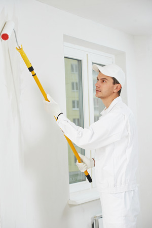 priming: One male house painter worker painting and priming wall with painting roller