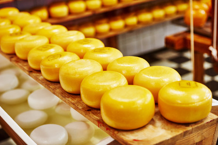 Cheese wheels on the shelves in diary production factory Foto de archivo