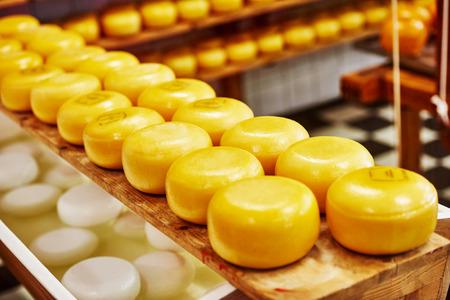 queso: Ruedas del queso en los estantes en la fábrica de producción diario