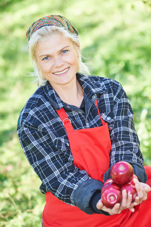 picker: Young woman picker portrait holding ripe apples in hands on summer day at orchard Stock Photo