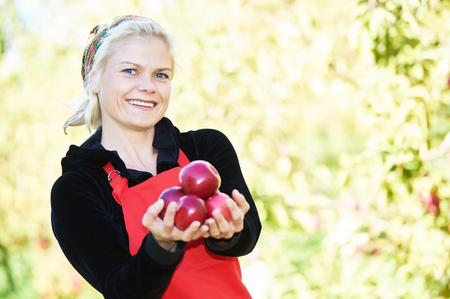 picker: Young smiling woman picker portrait holding ripe apples in hands on summer day at orchard