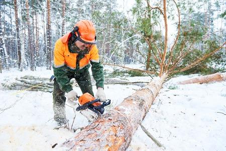 Lumberjack cutting tree in snow winter forest Archivio Fotografico