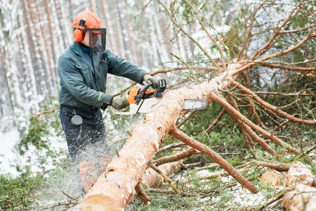 sawyer: Lumberjack cutting tree in snow winter forest Stock Photo