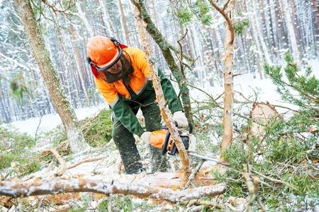 lumberman: Lumberjack cutting tree in snow winter forest Stock Photo