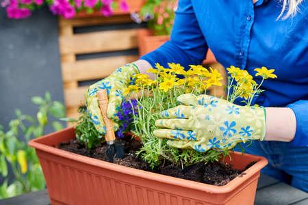 Flower planting and trasplantation into pot