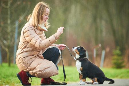 Dog walking and exercising outdoors. Command training