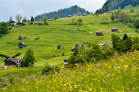 st gallen: Nice landscape with wild flower field close to Alt st Johan, a small village in St Gallen canton, in Switzerland. Stock Photo