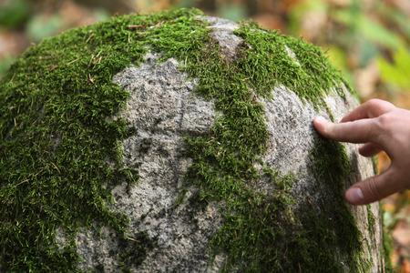 bark rain tree: Close up view of moss on a big stone‰'