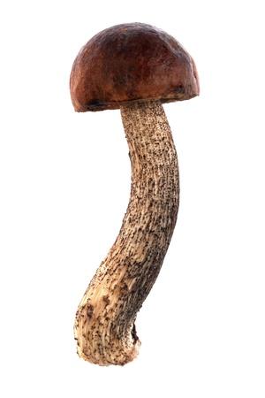 Birch mushroom isolated on white background