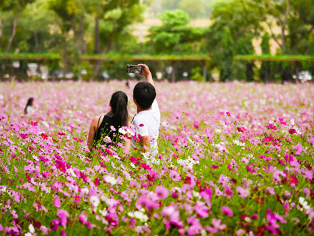 a couple of tourist  are taking a photo themself  (selfie) with smartphone in the beautiful cosmos flower field. Stock Photo
