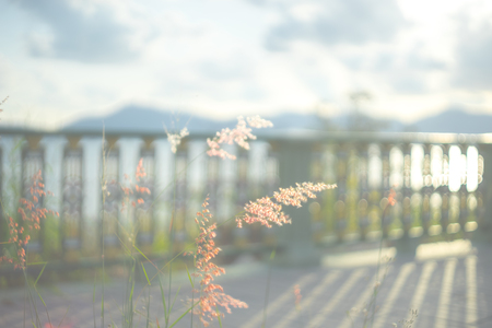 blurred image of glass flower. fence shadow mountain cloudy sky are background. Stock Photo