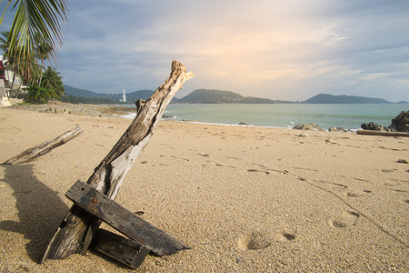 dead dry trunk branch tree with shadow on sand beach, mountain and sea are background, shoeprint on sand Stock Photo