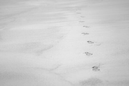 Dog 's footprint on sand beach ground floor , background and texture, black and white color