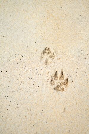 Dog 's footprint on sand beach ground floor , background and texture Stock fotó
