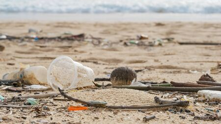 Environmental pollution. Ecological problem. Garbages, plastic, and wastes on the sandy beach of tropical sea.