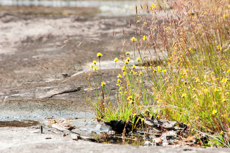 reflection water: Acqua riflessione di erba, fiori, e prato. Fiore prato nel urbano, fino Paese in Thailandia