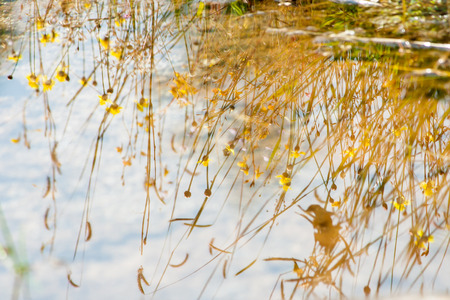 reflection water: Water reflection of grass, flower, and meadow. Meadow flower in the urban, up country in Thailand