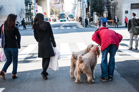 devote: man and his dog wait green traffic light for acroos at junction in tokyo, Japan Stock Photo