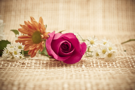 rosoideae: Focus Red Rose, in concept flower backgroud Stock Photo