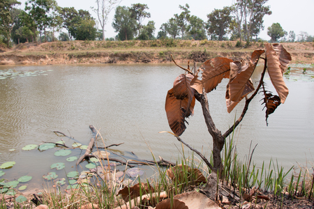 arbol de problemas: Ash and burned tree after fire near river. Deforest problem and fire for agriculture by farmer. Green house effect, global warming, and  elnino effect problem. Foto de archivo