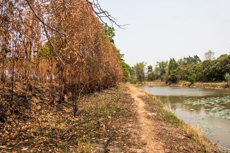 """arbol de problemas: Cenizas y quemó el árbol después de un incendio. Deforest problema y fuego para la agricultura por el agricultor. efecto de casa verde, calentamiento global, y elnino problema de efecto """"."""