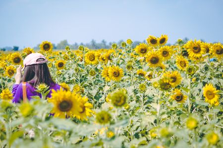 Girl is traveling in Sunflower farm. Sunflowers is blooming in farm, Saraburi, Thailand
