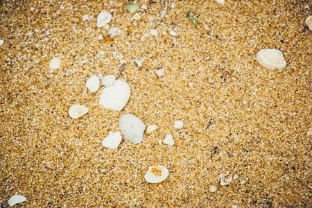 Sea shells on sand. Summer beach background. Top view, Texture Sand Dune Desert beside the beach.