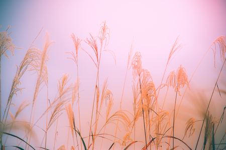 blur background flower of grass sway with wind, background texture and wallpaper concept. Stock Photo