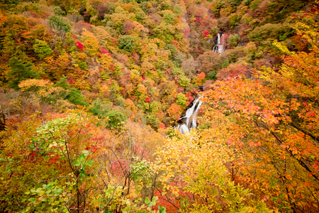 View of Japanese Maple leaf on Nyoho Mt. with Kirifuri waterfalls beautiful autumn at Nikko National Park Japan. Colorful leaf change to red and orange in Autumn festival. Stock Photo