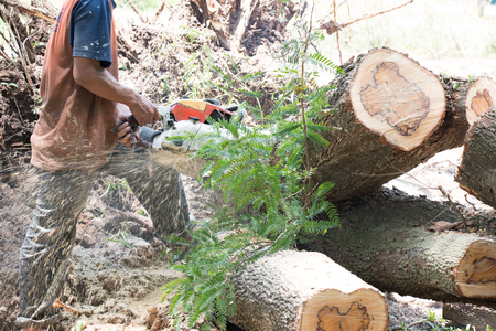 Chainsaw cutting trunk Stock Photo