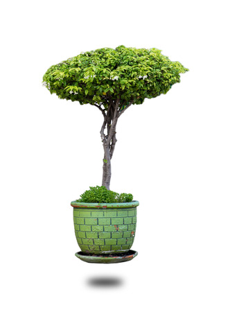 Bonsai in a jar separate from the white background. Stock Photo