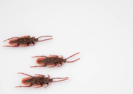 Cockroaches on a white background Foto de archivo