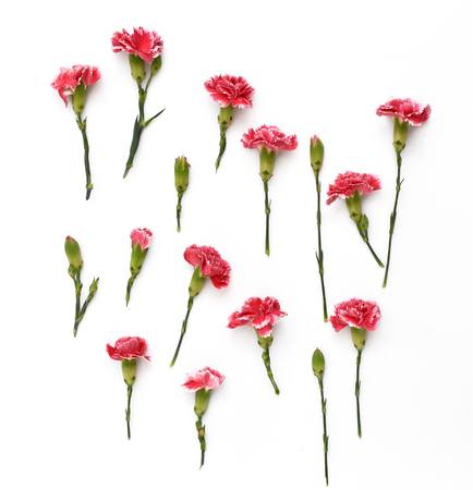 Carnation flowers on white background. Flat lay composition. Top view.